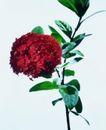 百花争艳0097,百花争艳,植物,红花 绿叶 枝叶
