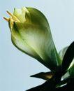 百花争艳0104,百花争艳,植物,花蕾 形状