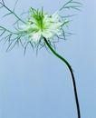 百花争艳0122,百花争艳,植物,