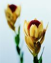 百花争艳0125,百花争艳,植物,