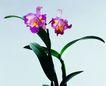 百花争艳0128,百花争艳,植物,