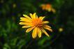 生活小品0034,生活小品,静物,花朵 秋菊 野花