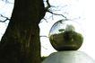 生活小品0038,生活小品,静物,水晶球 风景 树杆