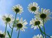 香水物语0033,香水物语,静物,白色 花盘 蓝天