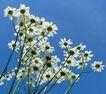 香水物语0034,香水物语,静物,植物 风景 素材