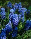 香水物语0036,香水物语,静物,花卉 植物 花束