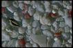 五彩石0401,五彩石,装饰,