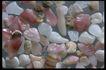 五彩石0411,五彩石,装饰,