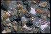 五彩石0431,五彩石,装饰,