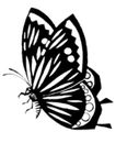 虫鱼0160,虫鱼,综合,蝴蝶