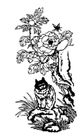 飞禽0218,飞禽,综合,牡丹 猫科动物