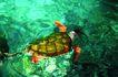 海底观赏0005,海底观赏,旅游风光,海龟