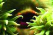 海底观赏0006,海底观赏,旅游风光,海底植物