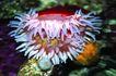 海底观赏0012,海底观赏,旅游风光,海底 海生植物