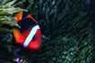 海底观赏0015,海底观赏,旅游风光,热带鱼 彩色身体
