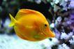海底观赏0017,海底观赏,旅游风光,小鱼 金色身体