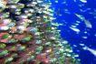 海底观赏0020,海底观赏,旅游风光,群鱼 游弋