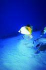 海底观赏0028,海底观赏,旅游风光,海底照片