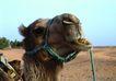 渡假圣地0008,渡假圣地,旅游风光,骆驼头部