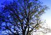 渡假圣地0012,渡假圣地,旅游风光,大树 枝繁叶茂
