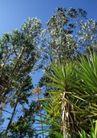 渡假圣地0038,渡假圣地,旅游风光,树叶 绿叶 景色