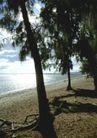 渡假圣地0040,渡假圣地,旅游风光,渡假地点 树根 湖水