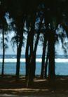 渡假圣地0046,渡假圣地,旅游风光,树林