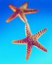 夏日标记0007,夏日标记,生活,海洋生物 两个海星