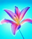 夏日标记0013,夏日标记,生活,缤纷花朵 迷幻色彩
