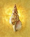 夏日标记0039,夏日标记,生活,贝壳 装饰物 海螺