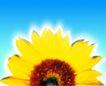 夏日标记0051,夏日标记,生活,向日葵花