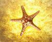 夏日标记0052,夏日标记,生活,一个海星