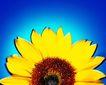 夏日标记0057,夏日标记,生活,黄色花瓣