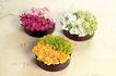 情人礼品0020,情人礼品,生活,美丽花朵 各色花朵