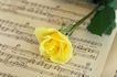 情人礼品0031,情人礼品,生活,乐谱 音乐 玫瑰
