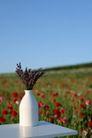 情人礼品0048,情人礼品,生活,白色花瓶