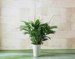 日常用品0129,日常用品,生活,绿色植物