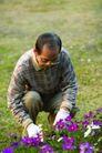 老人生活0029,老人生活,生活,紫色的花