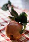 食物多姿0036,食物多姿,生活,绿叶 布料 布格