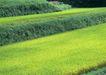 田园风景0223,田园风景,自然风景,