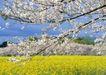 田园风景0226,田园风景,自然风景,
