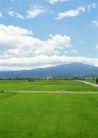 田园风景0233,田园风景,自然风景,田野 水稻 道路