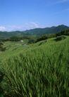田园风景0235,田园风景,自然风景,