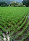 田园风景0237,田园风景,自然风景,