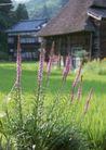 田园风景0249,田园风景,自然风景,