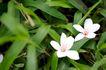 白色纯净花0020,白色纯净花,自然风景,
