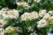 白色纯净花0028,白色纯净花,自然风景,