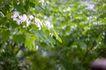 白色纯净花0031,白色纯净花,自然风景,绿叶 植物 春天