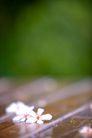白色纯净花0039,白色纯净花,自然风景,小白花 花朵 洁白