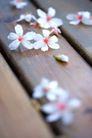 白色纯净花0047,白色纯净花,自然风景,